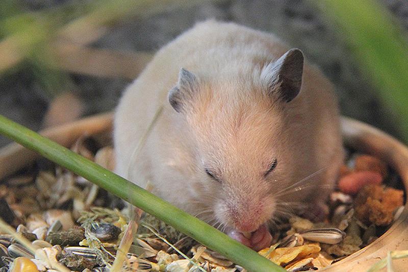 mäuse am futterhaus